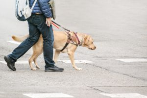 blind person with guide dog and cane wearing a backpack
