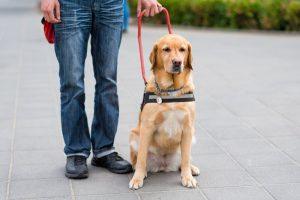 Man standing beside guide dog after ADA is passed